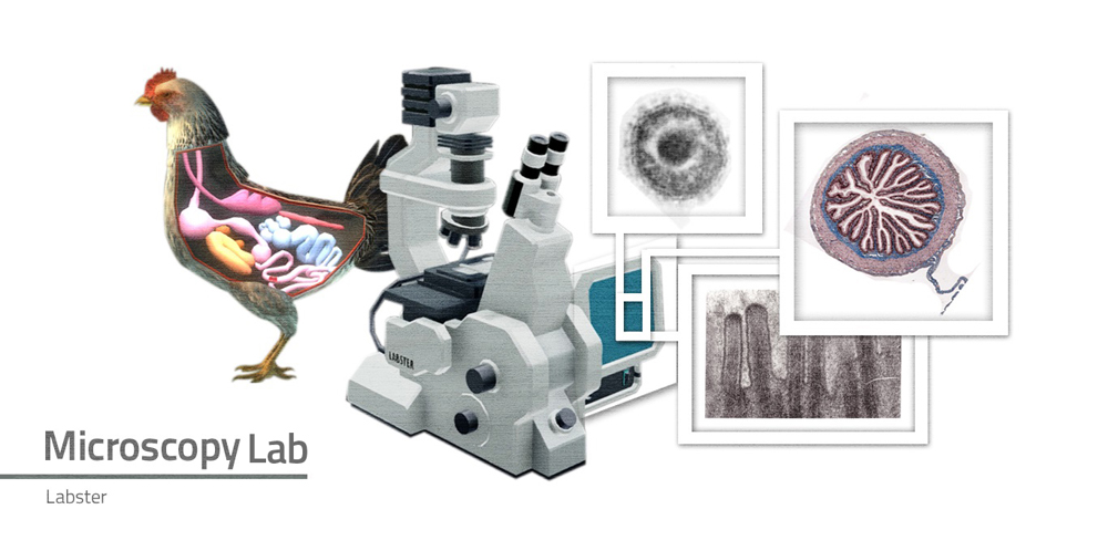 A chicken with internal organs displayed stands beside a light microscope. Three images show a grayscale spherical object, a colored cross-section of a tube, and a grayscale image of cellular protrusions.